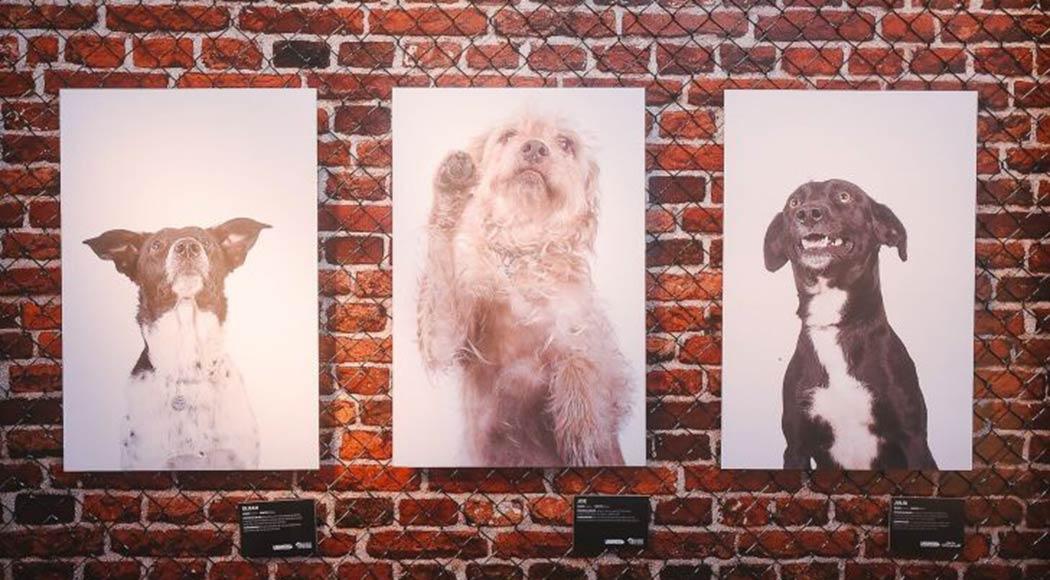 Lagunitas lança campanha para ajudar a encontrar cães perdidos