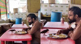 Indiano divide comida com pássaro em restaurante e vídeo viraliza; assista