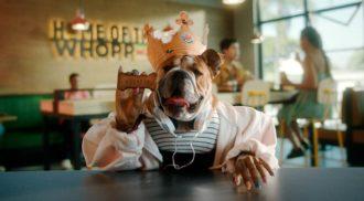 Burger King lança Whopper para cachorro, o Dogpper